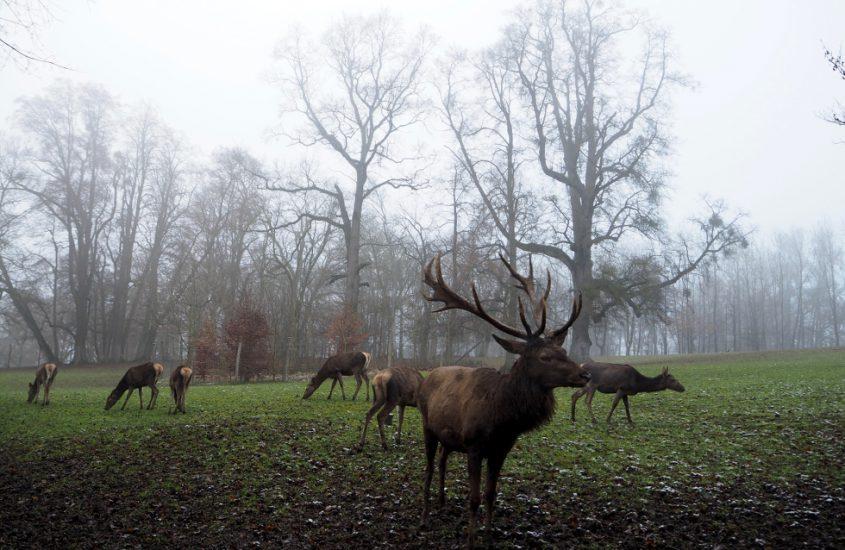 Tierpark Haag.